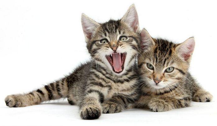 Manfaat Kucing