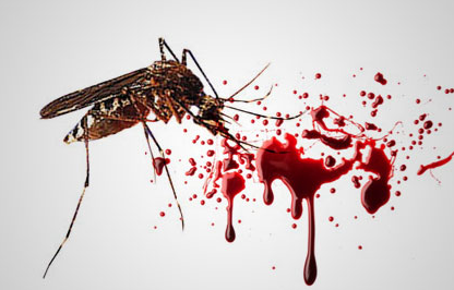 Nyamuk Demam Berdarah