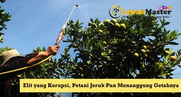 Petani Jeruk Indonesia