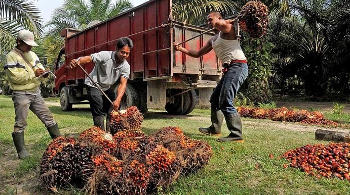 Sawit Kalimantan