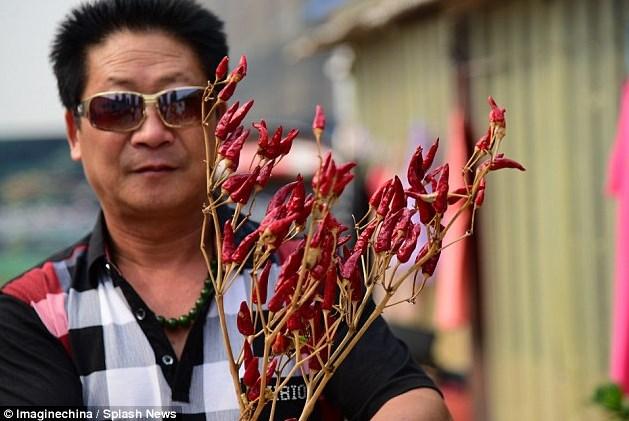 Raja Cabai Li YongZhi 01
