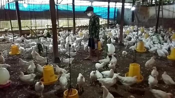 pasar ayam nasional